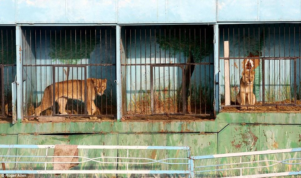 Zyumri zoo